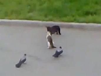 Kedilere karga gazı